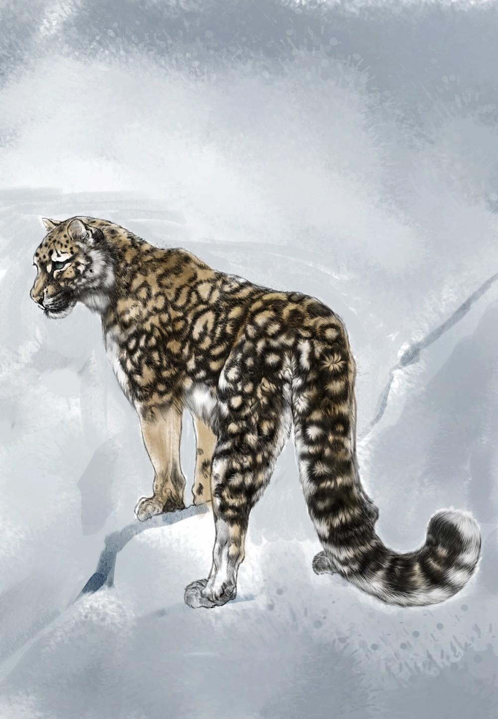 雪豹是一种美丽的动物,我准备画一张母亲和孩子的图,风雪中的雪豹母子